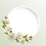 Предпосылка весны с белыми цветками вишни бесплатная иллюстрация