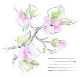Предпосылка весны с ветвью Сакуры. иллюстрация вектора