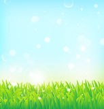 Предпосылка весны с травой Стоковые Изображения RF