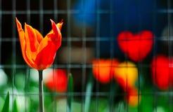Предпосылка весны флористическая Стоковое Фото