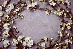 Предпосылка весны флористическая унылая Стоковые Фотографии RF