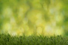 Предпосылка Весн-лета Стоковое Изображение RF