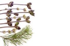 Предпосылка ветвей на белой изолированной предпосылке стоковое изображение