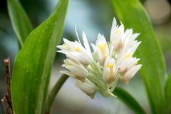 Предпосылка 442 взгляда белого цветка Стоковое Изображение