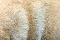 Предпосылка волос собаки Стоковое Изображение RF