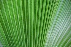 Предпосылка времени весны лист ладони зеленого цвета тропического завода Стоковые Изображения RF