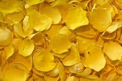 Предпосылка высушенных желтых лепестков розы Стоковые Фото