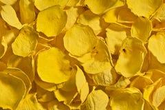 Предпосылка высушенных желтых лепестков розы Стоковые Изображения RF