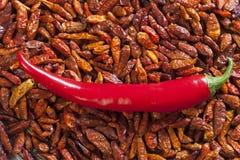 Предпосылка высушенных перцев chili Стоковое Фото