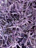 предпосылка выходит пурпур Стоковые Фотографии RF