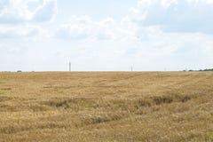 Предпосылка голубого неба пшеничного поля пасмурная Стоковое фото RF