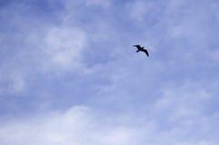 Предпосылка голубого неба с летанием птицы Стоковое фото RF