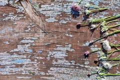 Предпосылка границы весны с цветками Стоковые Фотографии RF