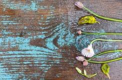 Предпосылка границы весны с цветками Стоковое Фото