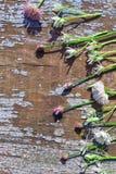 Предпосылка границы весны с цветками Стоковое фото RF