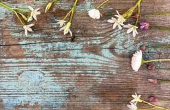 Предпосылка границы весны с цветками Стоковое Изображение RF