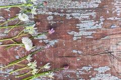 Предпосылка границы весны с цветками Стоковая Фотография