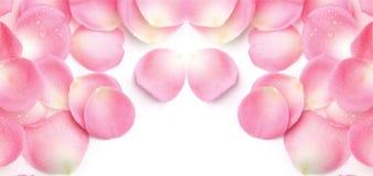 Предпосылка лепестка розовая стоковая фотография