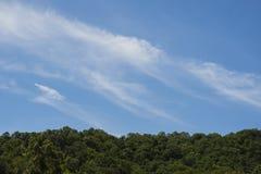 Предпосылка дерева и голубого неба Стоковая Фотография RF