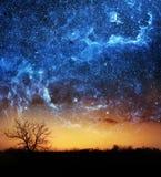 предпосылка дерева и космоса Стоковые Изображения RF