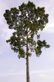 Предпосылка дерева и неба Стоковое Изображение RF