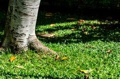 Предпосылка дерева и травы в полдне стоковые фото