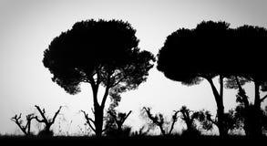 Предпосылка дерева конспекта B&W Стоковое Изображение