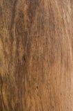 Предпосылка дерева Стоковая Фотография