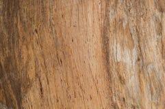 Предпосылка дерева Стоковое Фото