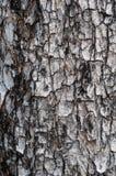 Предпосылка дерева Стоковые Изображения