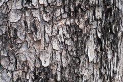 Предпосылка дерева Стоковые Изображения RF
