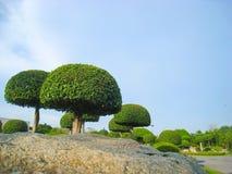 Предпосылка деревьев и камней карлика Стоковое Фото