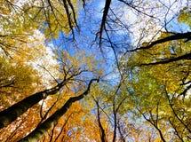 Предпосылка деревьев осени Стоковое фото RF