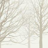 Предпосылка деревьев Стоковые Изображения