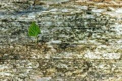 Предпосылка деревянного крупного плана текстуры Стоковое Изображение RF