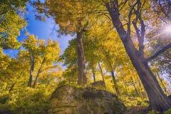 Предпосылка леса падения Стоковые Изображения