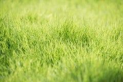 Предпосылка лета зеленой травы Стоковые Изображения RF