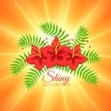 Предпосылка лета с красивыми цветками и ярким Солнцем Стоковые Фото