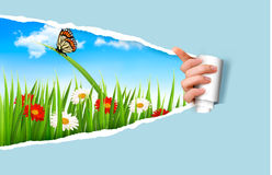 Предпосылка лета с цветками, травой и ladybug Стоковые Изображения