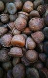 Предпосылка жолудей Стоковое фото RF