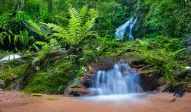 Предпосылка джунглей Стоковая Фотография RF