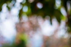 Предпосылка запачканная природой стоковое фото