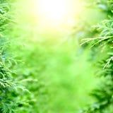 Предпосылка запачканная растительностью Стоковые Фото