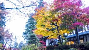 Предпосылка захода солнца осени кленового листа красным запачканная деревом Стоковые Фотографии RF