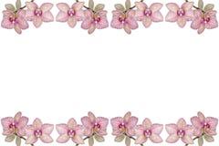 Предпосылка зацветая орхидей Стоковая Фотография
