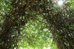 Предпосылка зеленого растения, в большом саде Стоковые Фото