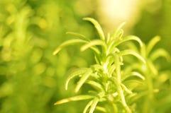 Предпосылка зеленого растения и листьев Стоковая Фотография