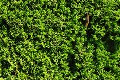 Предпосылка зеленого цвета Стоковые Фотографии RF