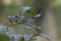Предпосылка зеленой листвы листьев папоротников тропическая Дождевой лес Стоковые Фотографии RF