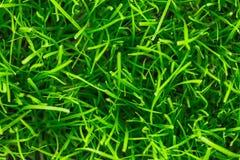 Предпосылка зеленой травы близкий свежий зеленый цвет травы вверх Предпосылка для надписей Стоковые Изображения RF